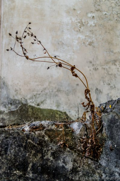 photo: plant surviving in a wall