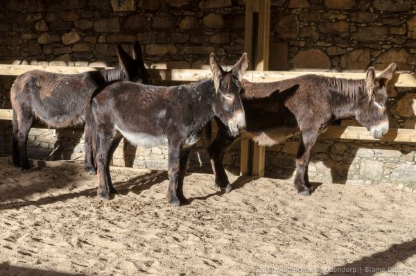 photo: donkeys @ Quinta do Pisão