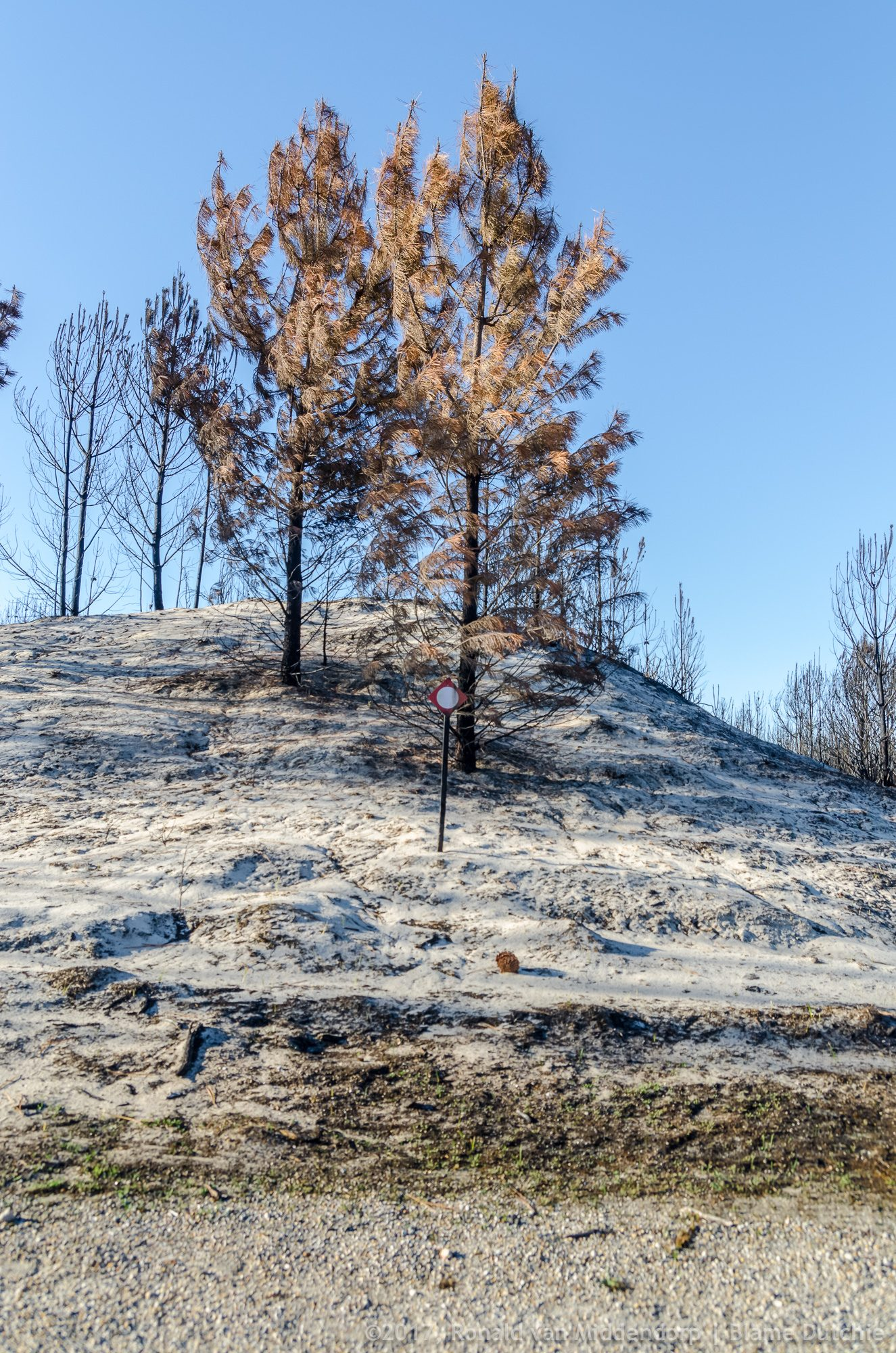 photo: after the fires