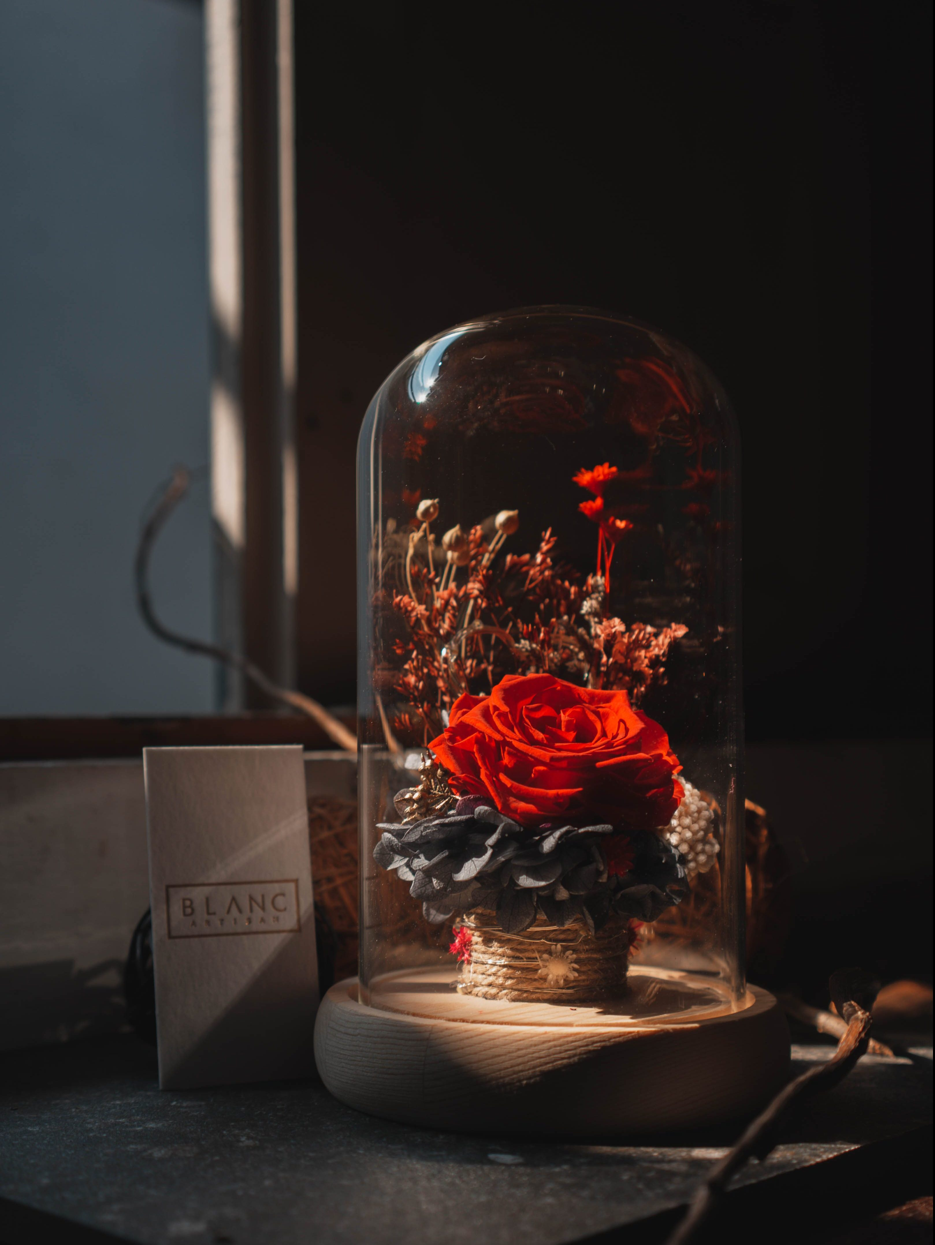 RENNES - PRESERVED RED ROSE DOME | LA VIE EN ROSE | BLANC SIGNATURE