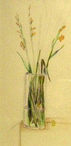 drawing of Croscosmia by Blanche Benton