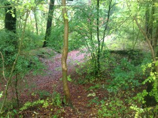 2013 Greenhall Woodland trails cleared of felled trees (PV)