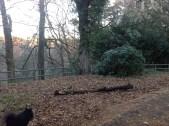 2013 Greenhall Metal woodland railings fixed (PV)