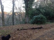 2013 Greenhall Metal woodland railings fixed (PV)