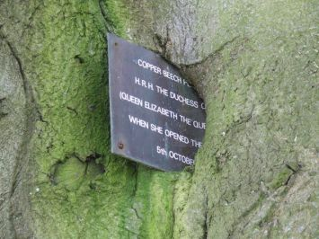 2011 Opening Plaque embedded in tree