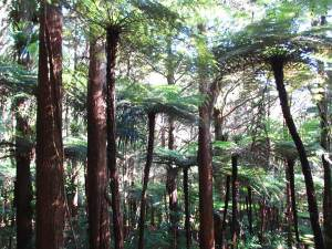 Trees in Wellington, New Zealand