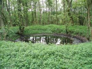 2009 Lime pit at Greenhall