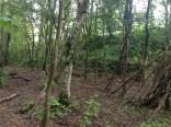 2014 Survival Camp , Calder Blantyre by PVeverka