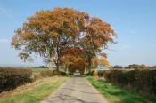 2014 Calderside Trees by Elizabeth Weaver