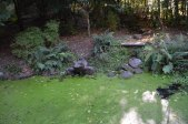 2014 David Livingstone Africa Gardens October by Andy Bain