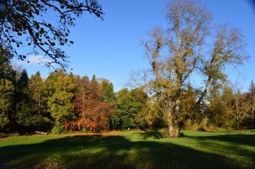 2014 Greenhall Autumn colours by Andy Bain