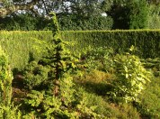 2012 Croftfoot Gardens near Kirkton Park (PV)