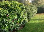 2012 Gardens at Croftfoot (PV)