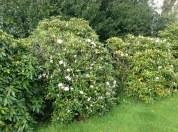 2013 Spring Gardens at Croftfoot (PV)