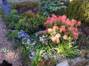 2013 Spring Front Garden at Croftfoot (PV)