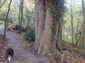 2014 Tree at David Livingstone Centre