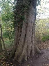 2014 Tree at the Woodland near David Livingstone Centre