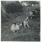 1969 Cochranes at Calderside. Shared by J Cochrane