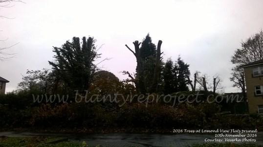2016-lomond-view-trees-wm1