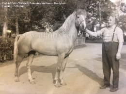 1967 Palomino Stallion & Peter Wilkie