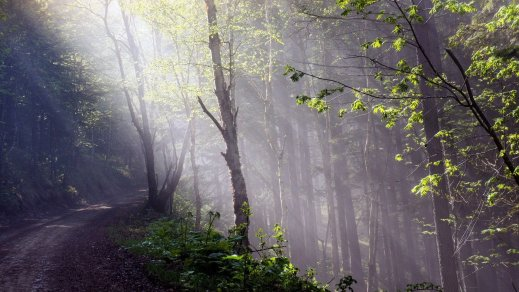 trees-paths-reflectionsnature-rays-rays-high-definition-sun-outdoorsdownload-hd-wallpapers-forests-mobile-phone-mac-backgrounds-free-images-fresh-air