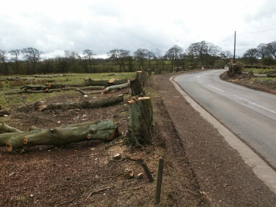 2005 Tree felling at Sydes