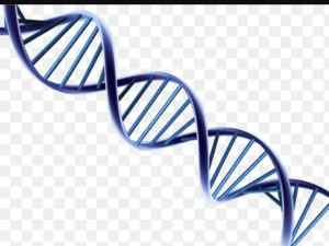 DNA is likened to two serpents on a pole or ladder.
