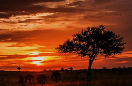 BLQ_Zambia
