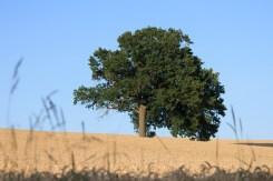 Natur Landschaft Feld Getreide