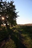 Natur Landschaft Sonne Abend
