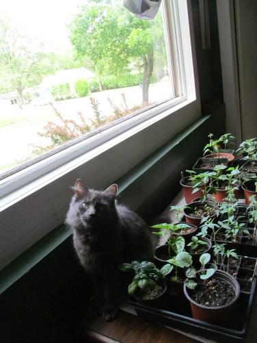 kitty plant