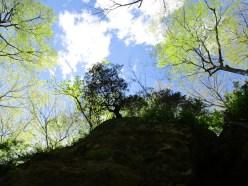green forest skyline