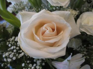 white rose for Cheri
