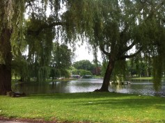 A rainy-turned-sunny-turned-cloudy-turned-muggy day spent wandering the Back Bay with my friend Cody; our view from a bench in the Public Gardens, gorgeous as always.