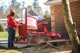 Stump grinding: Blazer Tree Services, Richmond VA area
