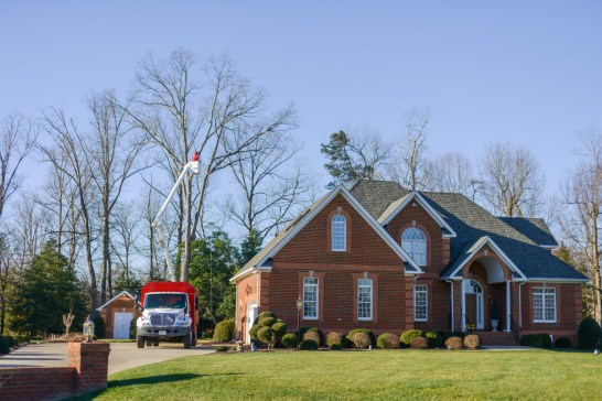 Residential Tree Care: Blazer Tree Services, Richmond VA area