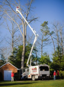 Tree pruning / tree trimming: Blazer Tree Services, Richmond VA area