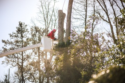 Tree removal in a bucket truck: Blazer Tree Services, Richmond VA area