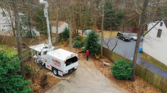 Tree pruning in a bucket truck: Blazer Tree Services, Richmond VA area