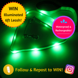 Win LED Dog Leash!