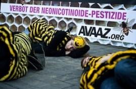 """bee """"die in"""" in Cologne"""