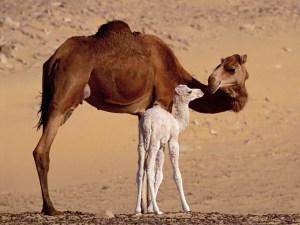 motherly-love-animals-370-44