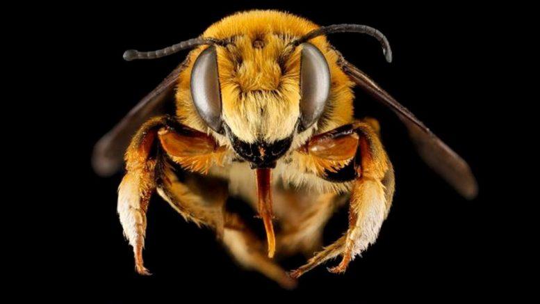 2 Studies Show 347 Native Bee Species 'Spiraling Toward Extinction'
