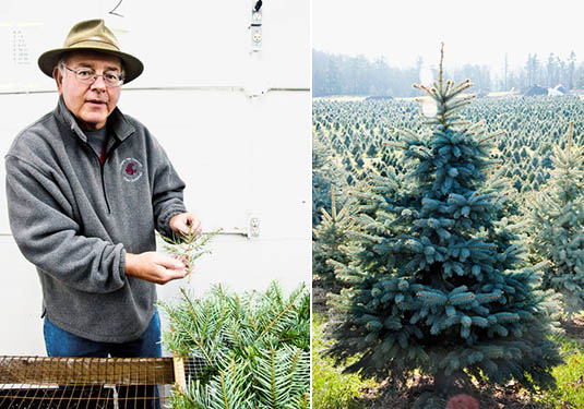 Pop-Up Forests and Experimental Christmas Trees