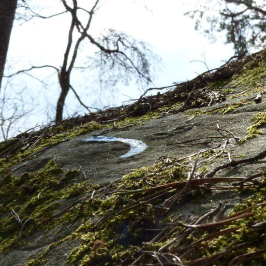 L'action d'un des acteurs qui préservent la forêt : Les Amis de a Forêt de Fontainebleau. On en voit le résultat mais il y a beaucoup de travail derrière.