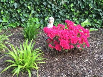 Erdmännchen im Blütenkleid