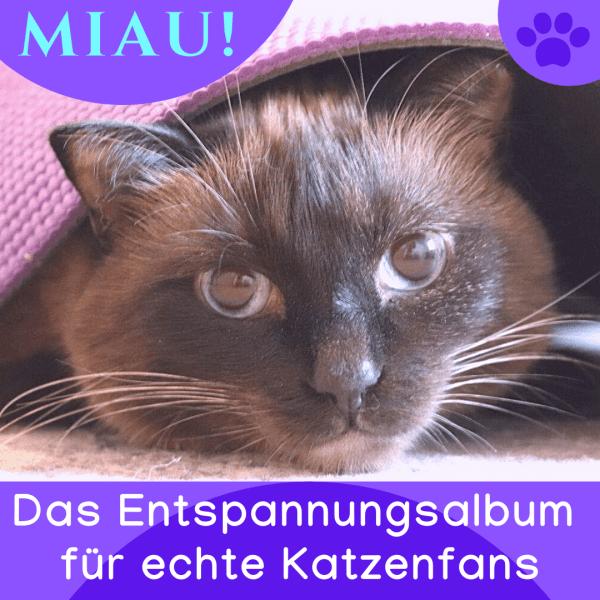 Katzenhalter