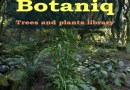 Botaniq Addon cover on Blender-addons.org