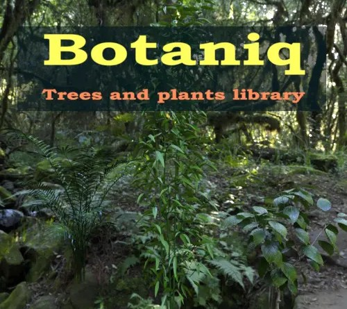 Botaniq Addon cover on Blender-addons.org
