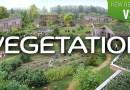 Vegetation Addon for Blender – Tree Plant and Shrub Library